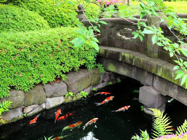 Les carpe Koi du jardin du Temple Senso-Ji à Asakusa.
