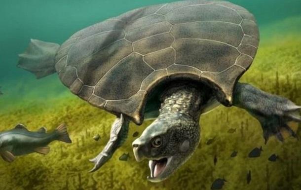 Знайдено останки гігантської стародавньої черепахи