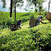 பெருந்தோட்ட தொழிலாளர்களின் 1000 ரூபாய் வேதனம் தொடர்பில் வெளியான செய்தி