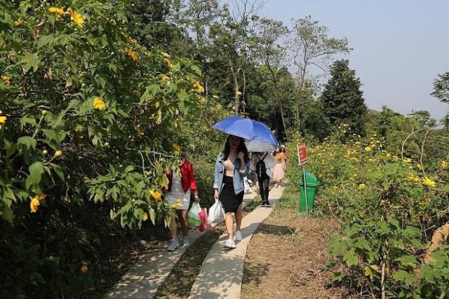 """Giới trẻ Hà Thành rủ nhau đi """"check-in"""" với hoa dã quỳ 3"""