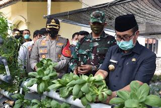 Dalam Rangka Ketahanan Pangan, Polresta Cirebon Gelar Panen Raya
