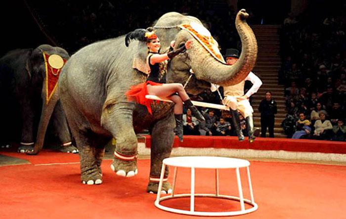 Gajah Selamat Oleh Vodka