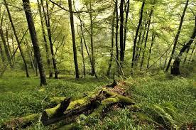 15+ Manfaat Hutan Untuk Manusia dan Makhluk Hidup Beserta Fungsinya