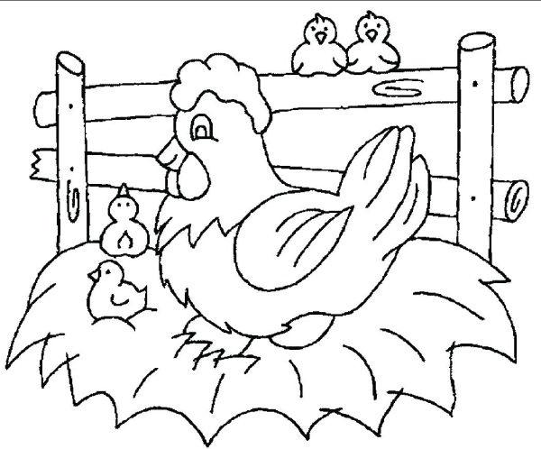 Gambar ayam hitam putih