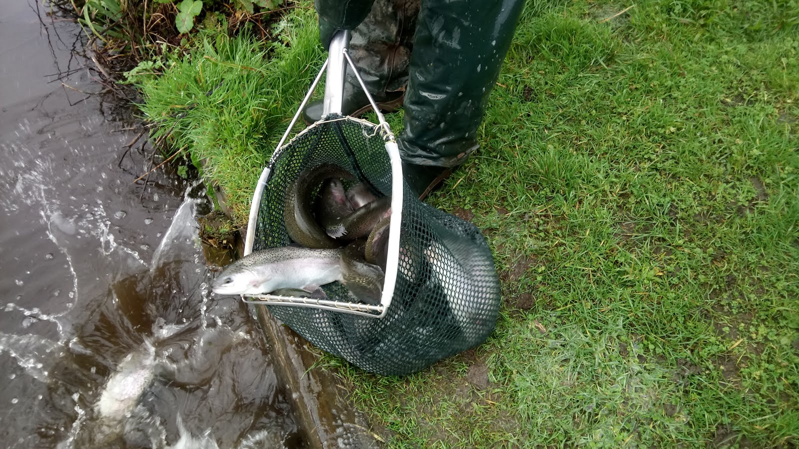 STOCKING FROM EXMOOR FISHERY