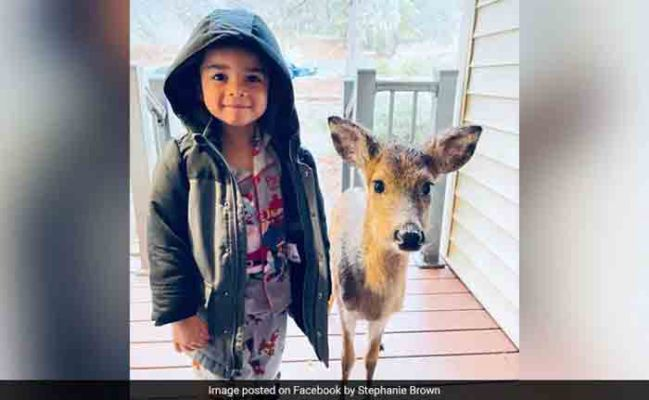4-Year-Old Dominic With Baby Deer
