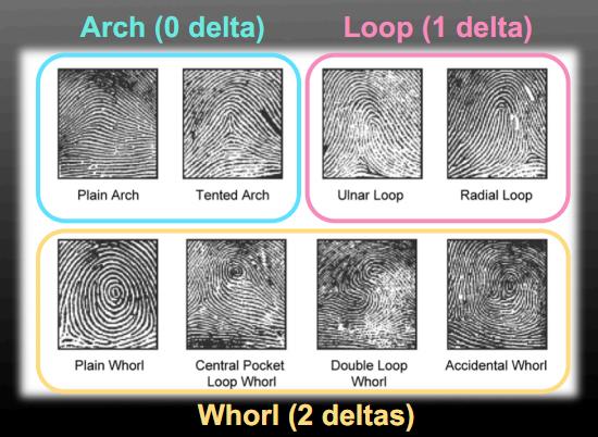2011 CSI: fingerprint database!