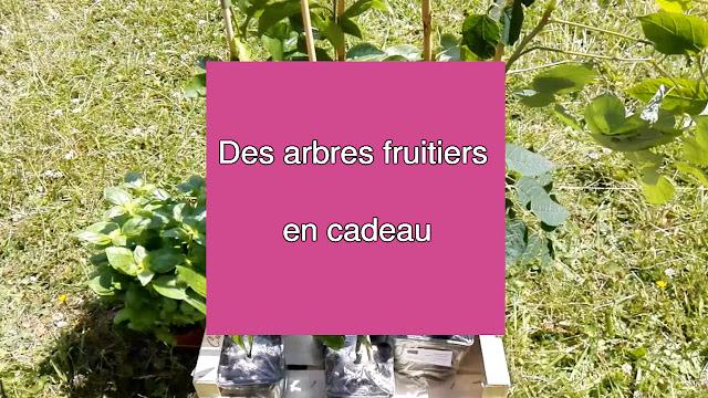 Des arbres fruitiers en cadeau (vidéo)