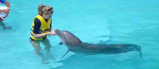Nadar com golfinhos no Interactive Aquarium em Cancún