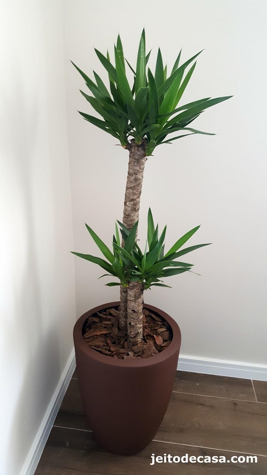 Plantas para escrit rio jeito de casa blog de for Plantas decorativas para oficina