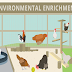 Environmental Enrichment Ideas for Poultry #infographic