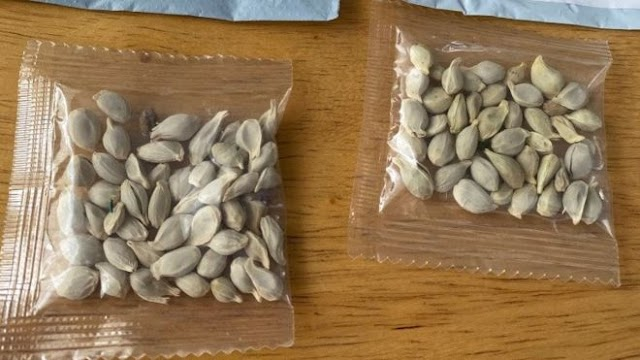 Health,Food : The Mystery of The unidentified seeds posted from China to US addresses
