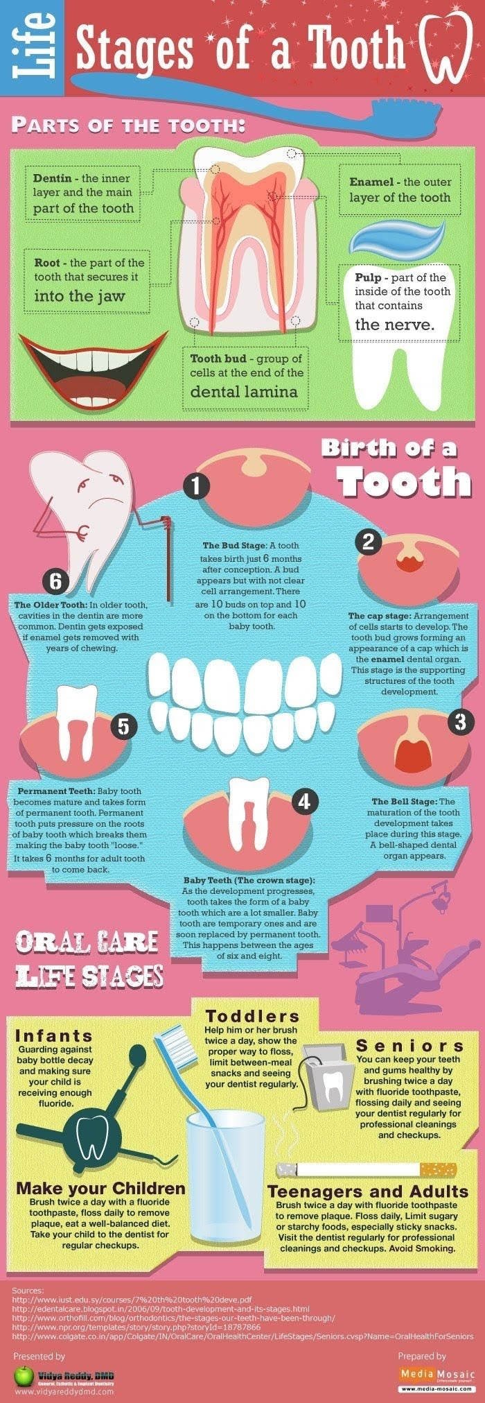Life Stages of a Tooth #infographic