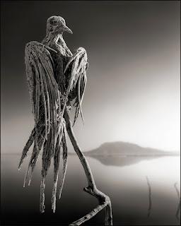 Скелет на птица
