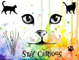 http://www.craftallday.co.uk/visible-image-curious-cats/