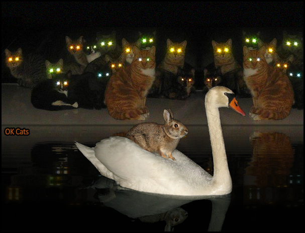 Photoshopped Cat picture •  22 cats with laser eyes looking at rabbit perched on swan in the pool, by night! [ok-cats.com]