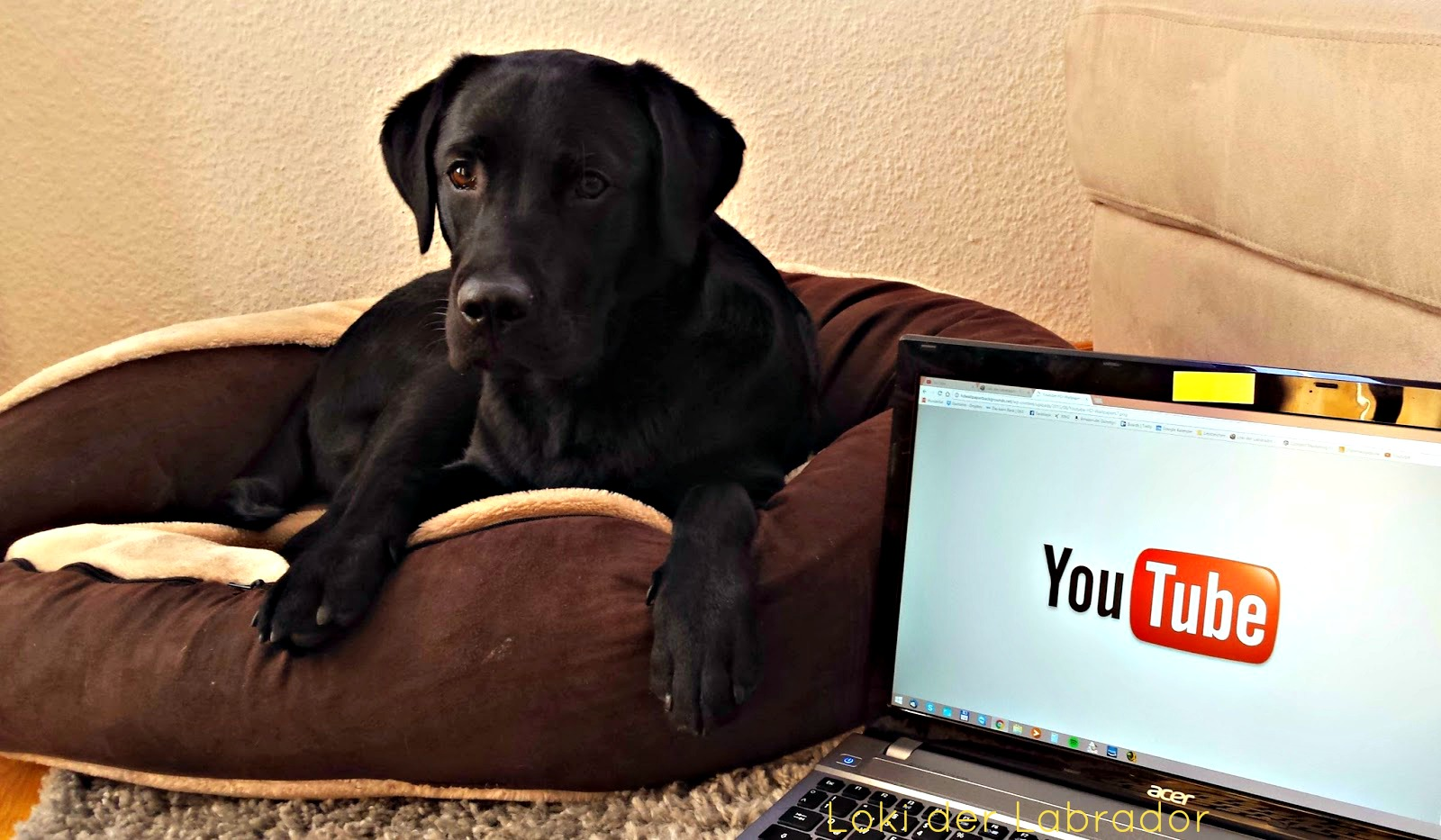 Youtube Hundekanäle Loki