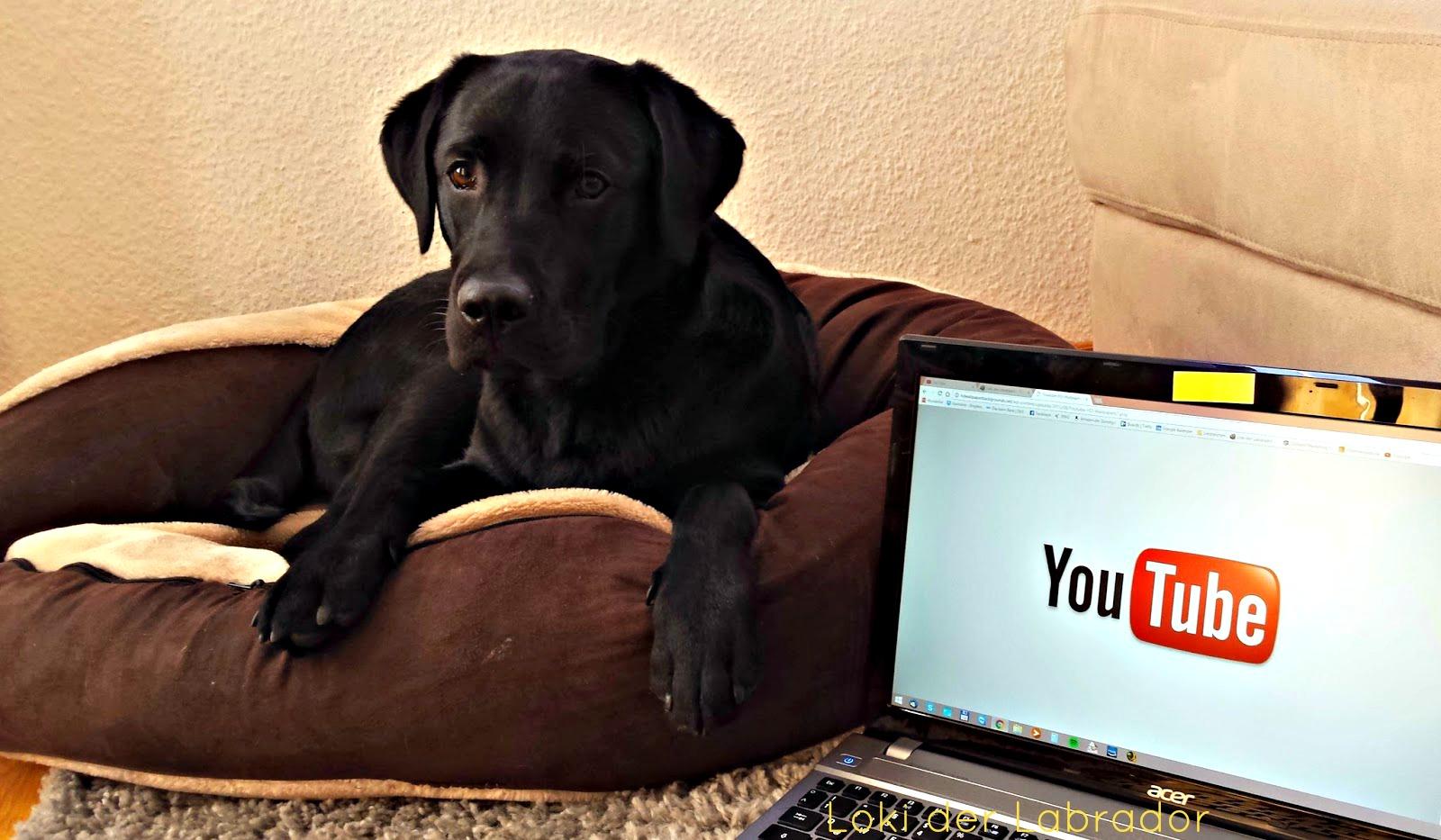 Youtube Hundekanäle Loki