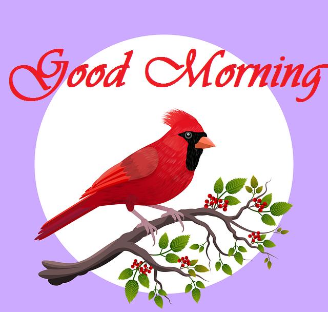 Beautiful good morning bird with sun image