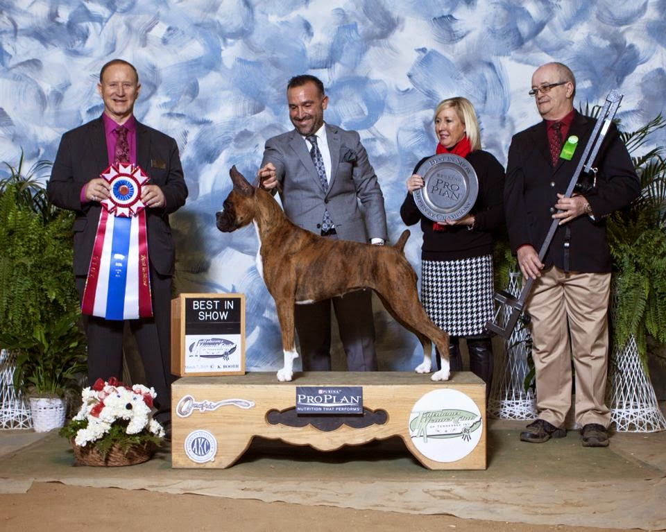 DOG SHOW POOP: BOXER BEST IN RALEIGH NC