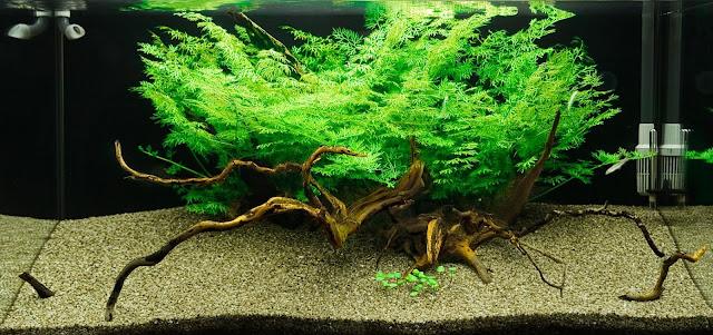 cây xương cá tạo vẻ đẹp nên thơ
