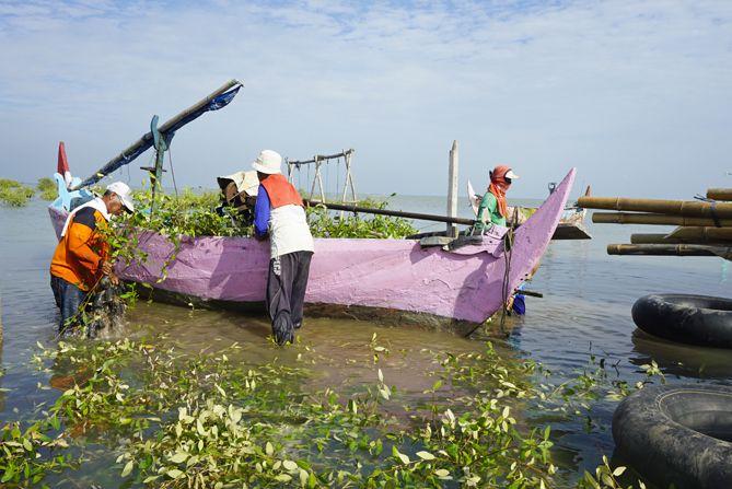 Bapak-bapak sedang mengangkut bibit pohon untuk penanaman di Mangrove Pasarbanggi
