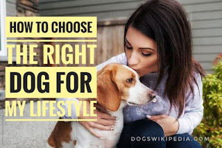 How to choose the right dog for my lifestyle