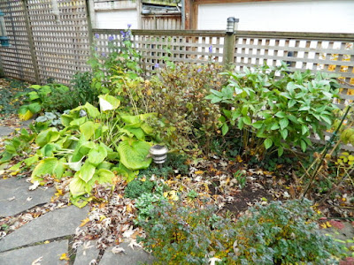 Toronto Gardening Services Leslieville Backyard Garden Fall Clean up before by Paul Jung