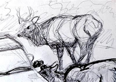 """That Elk in the Back"" elk sketch two detail ©2020 Tina M.Welter"