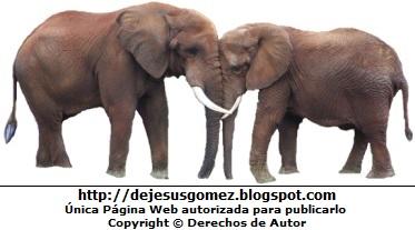 Foto de elefantes (madre e hijo) por Jesus Gómez