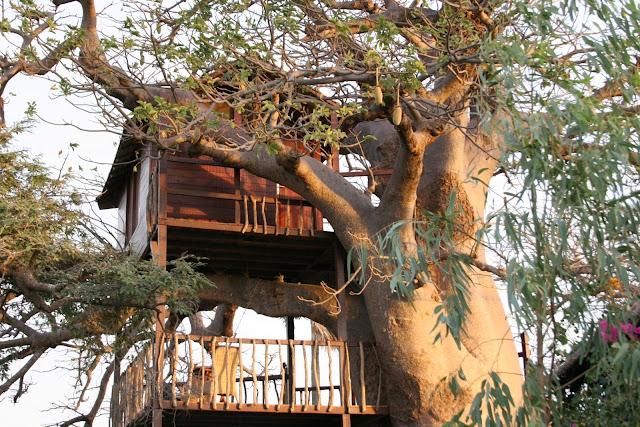 Hôtel, Lodge, collines, Niassam, Palmarin, Sine, Saloum, piscine, bar, buffet, plat, cuisine, fleuve, LEUKSENEGAL, Dakar, Sénégal, Afrique