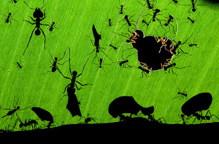 Wildlife Photographer of the Year formiche