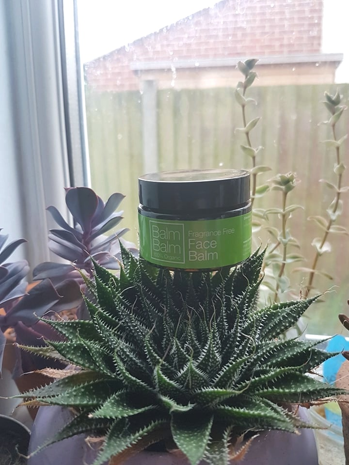 Balm Balm Fragrance Free Face Balm on top of a prickly succulent in front of a window