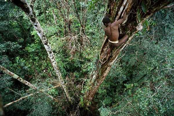 Rumah Pohon Tinggi Suku Korowai