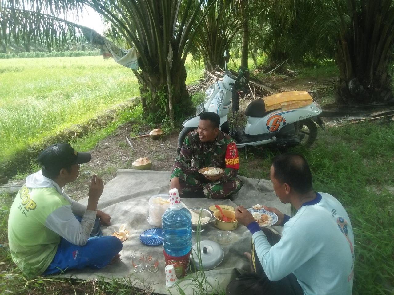 Bentuk Keharmonisan Seorang Babinsa dan Warganya di Saat Makan Siang Bersama di Tengah Sawah