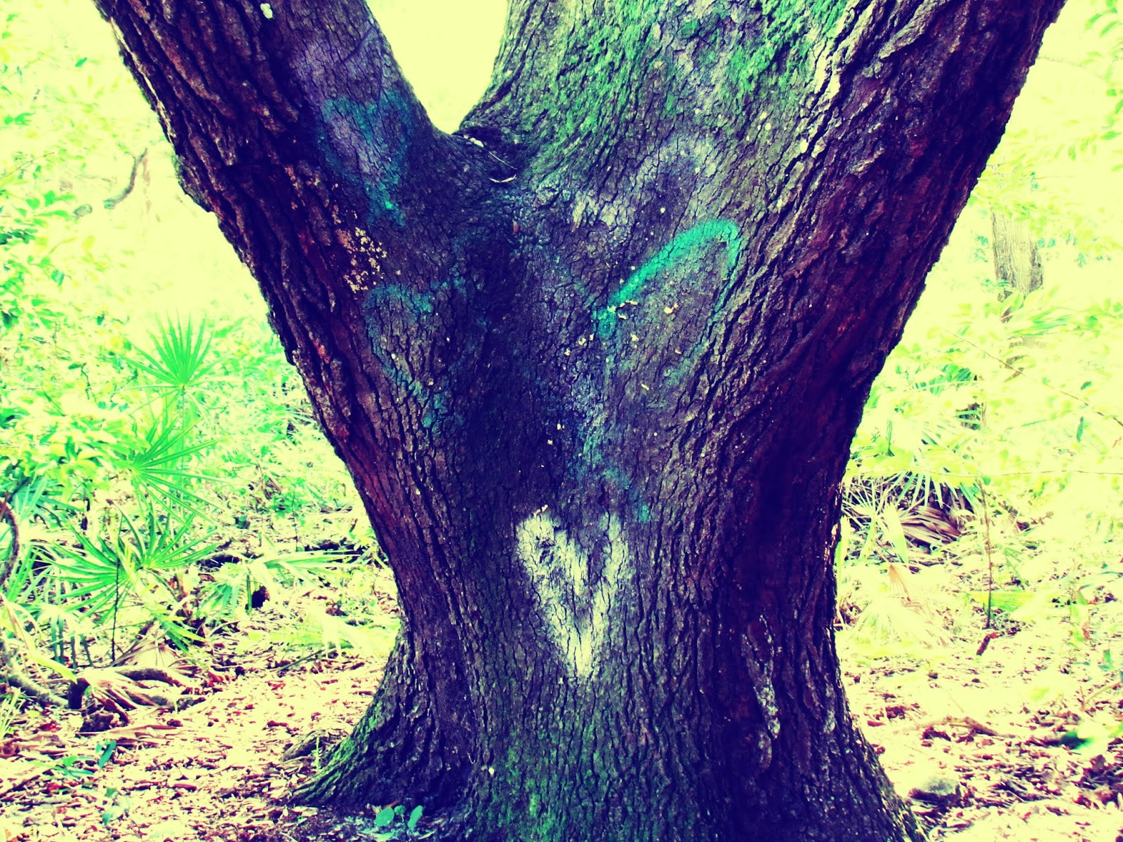 An old oak tree with colorful chalk hearts drawn all over it in Florida with Spanish moss