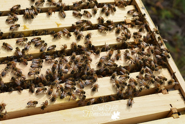 Beekeeping for Beginners will have you and your bees buzzing with delight.