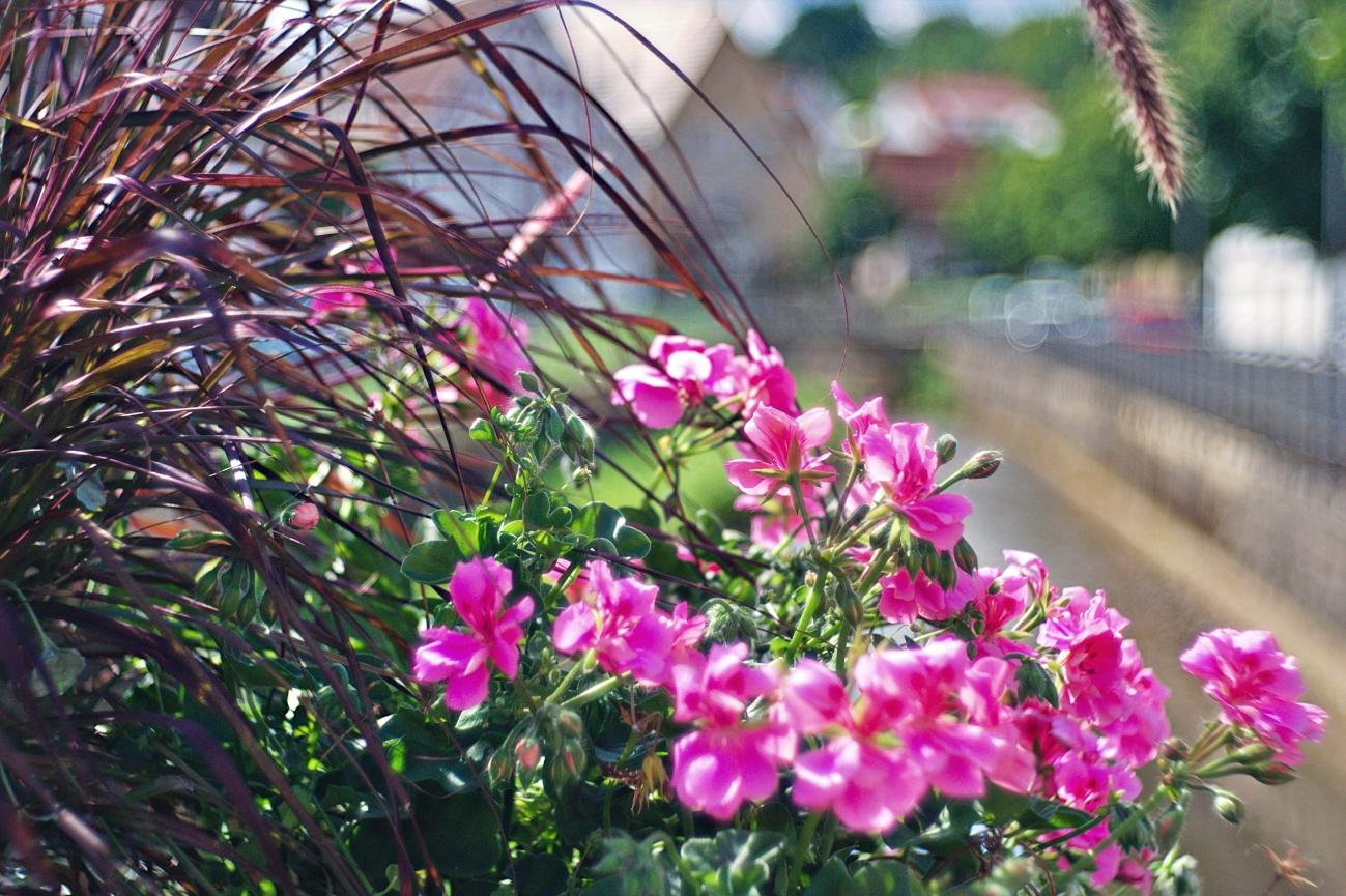Zum Tagesabschluss — Blumenschmuck auf der Steinachbrücke in Linsenhofen