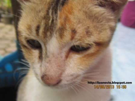 foto kucing yang sedih