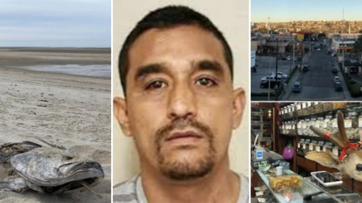 """La caída del Zar de la Totoaba, la cocaína del mar, """"El Chapo de la Vaquita Marina"""""""