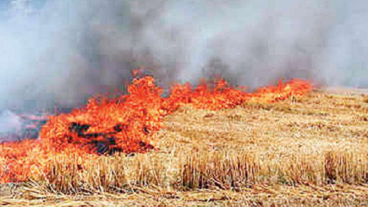 what is the plan to stop burning stubble