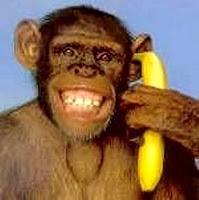 citare scimmia storytelling comunicazione blogging