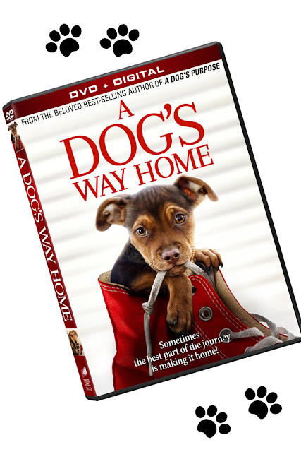 A Dog's Way Home DVD Kids Family Movie