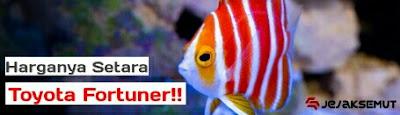 ikan hias air laut termahal di dunia