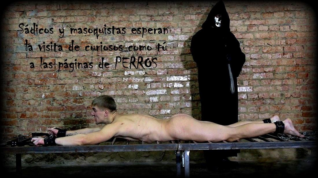 https://nuevaediciondeperros.blogspot.com/2019/05/el-favorito-del-gran-maestro.html