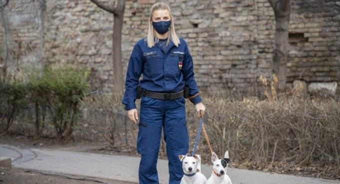Kutyáit sétáltató józsefvárosi rendőrnő buktatott le egy körözött nőt