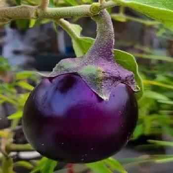 वांगी, brinjal vegetables name in Marathi