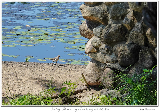 Sudbury River: ... if I could only ask this bird...