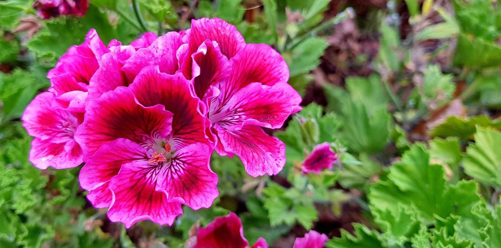 flores que sobressaem