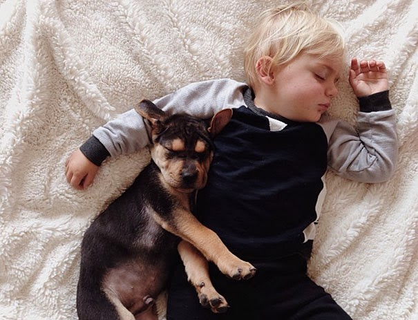 puppy and toddler nap